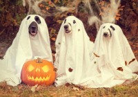 halloween-hunde-baby-express-barbara-mucha-media